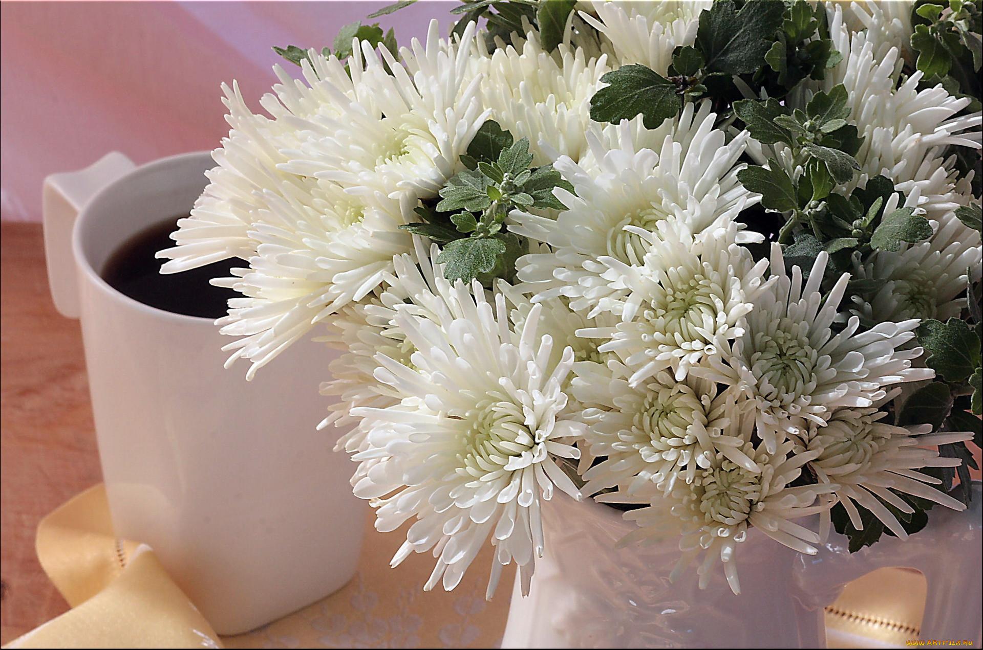 картинки на рабочий стол хризантемы букет как мистер бёрнс